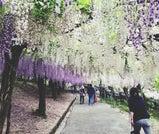陽気な春の訪れを感じる大分「九重町」で、天空散歩と絶景ドライブを楽しむ旅