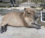 避暑地・那須高原で過ごす、動物ふれあい旅
