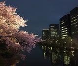 福岡の春を、昼も夜も楽しむよくばり旅