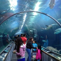 Photo prise au Aquarium of the Bay par Huong N. le6/20/2012