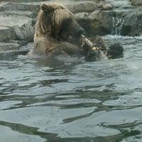 4/10/2011 tarihinde Angela M.ziyaretçi tarafından Minnesota Zoo'de çekilen fotoğraf