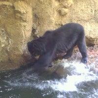 Снимок сделан в Phoenix Zoo пользователем Reggie A. 12/29/2011