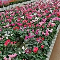 Centro Giardinaggio S Fruttuoso 4 Tips From 188 Visitors