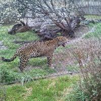 3/15/2014에 Alice B.님이 Cameron Park Zoo에서 찍은 사진