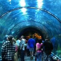 Audubon Aquarium of the Americas - French Quarter - 119 tips