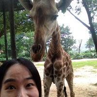 Das Foto wurde bei Xiang Jiang Safari Park, Guangzhou von Svily C. am 5/11/2013 aufgenommen