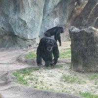 3/14/2018 tarihinde Tim P.ziyaretçi tarafından Chimpanzee Exhibit'de çekilen fotoğraf