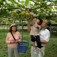 9/8/2013에 はる マ.님이 坂上ぶどう園에서 찍은 사진