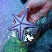 Foto diambil di SEA LIFE Grapevine Aquarium oleh Dee S. pada 12/6/2013
