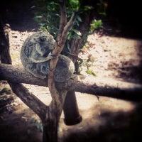 Foto scattata a Koala Exhibit da Ryan B. il 3/25/2013