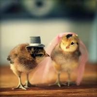 Снимок сделан в Chicken Village пользователем Vitaly O. 3/19/2015