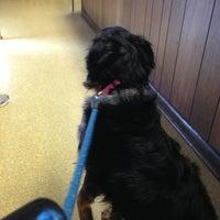 Foto tomada en Jacksonville Animal Hospital por Dianne H. el 4/2/2013