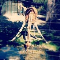 Снимок сделан в Zoo Basel пользователем Marcel S. 9/23/2013