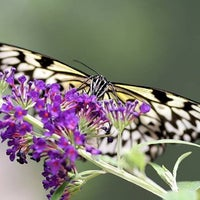 Photo taken at Butterfly Wonderland by Rachel P. on 7/17/2013