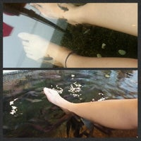 Kenko Reflexology & Fish Spa (Now Closed) - Bukit Bintang