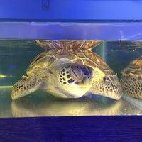 5/22/2018 tarihinde Nurkanur E.ziyaretçi tarafından Deniz Biyolojisi Müzesi'de çekilen fotoğraf