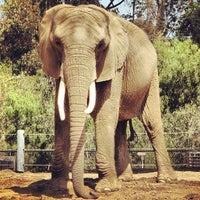4/11/2013 tarihinde Tom B.ziyaretçi tarafından San Diego Hayvanat Bahçesi'de çekilen fotoğraf