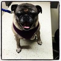 Das Foto wurde bei Bulger Veterinary Hospital von Zachary S. am 8/19/2014 aufgenommen