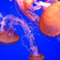 12/30/2012에 Liz W.님이 SEA LIFE Minnesota Aquarium에서 찍은 사진