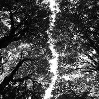 Снимок сделан в Forest Park - Wildwood Trail пользователем Jake D. 10/8/2012
