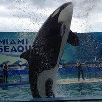 3/26/2013 tarihinde Erika ~🐶~ziyaretçi tarafından Miami Seaquarium'de çekilen fotoğraf