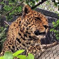 6/1/2013 tarihinde Ramy R.ziyaretçi tarafından San Diego Hayvanat Bahçesi'de çekilen fotoğraf