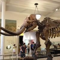 Foto scattata a American Museum of Natural History da Emiko T. il 7/27/2013