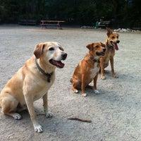 7/15/2011 tarihinde Michael W.ziyaretçi tarafından Tompkins Square Park Dog Run'de çekilen fotoğraf