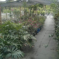 Photo Taken At Pells Citrus And Nursery By Karina G On 8 10