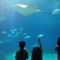 Photo prise au Maui Ocean Center, The Hawaiian Aquarium par César M. le4/3/2013
