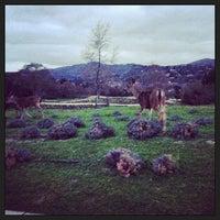 Das Foto wurde bei Carmel Valley Ranch von Melissa S. am 2/19/2013 aufgenommen