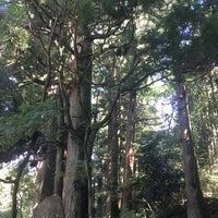 9/23/2018に游夢が箱根旧街道 杉並木で撮った写真