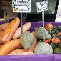 11/3/2013에 Allison M.님이 Nick's Garden Center & Farm Market에서 찍은 사진