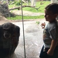 4/13/2018 tarihinde Grisel S.ziyaretçi tarafından Chimpanzee Exhibit'de çekilen fotoğraf