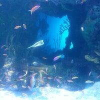 รูปภาพถ่ายที่ Ocean Voyager built by The Home Depot โดย Tasha T. เมื่อ 2/1/2013