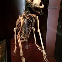 11/16/2013에 Craig W.님이 The Mary Rose Museum에서 찍은 사진