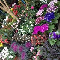 Mercado De Plantas Y Flores Cuemanco Cuemanco Xochimilco