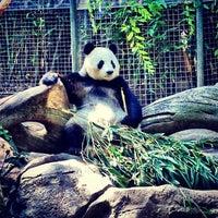 7/6/2013 tarihinde Christopher E.ziyaretçi tarafından San Diego Hayvanat Bahçesi'de çekilen fotoğraf