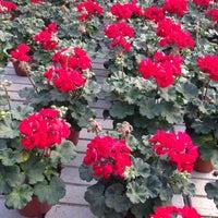 Fiori Quaiato.Floricoltura Quaiato