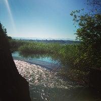 8/1/2013にPeter Z.がNaturschutzgebiet Unterer Greifenseeで撮った写真