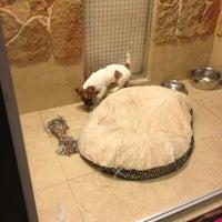 Das Foto wurde bei Cats & Dogs von Роман Ж. am 2/23/2013 aufgenommen