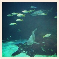 Photo Taken At Virginia Aquarium Amp Marine Science Center By Brett E