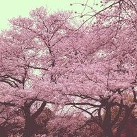 Das Foto wurde bei Shinjuku Gyoen von ykr_gnn am 3/23/2013 aufgenommen