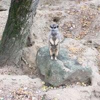 Photo prise au Parc zoologique et botanique de Mulhouse par Viktoryia H. le10/31/2018