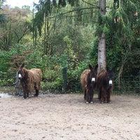Photo prise au Parc zoologique et botanique de Mulhouse par Viktoryia H. le11/1/2018