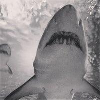 Das Foto wurde bei SEA LIFE Minnesota Aquarium von reiswigPHOTO am 7/18/2013 aufgenommen