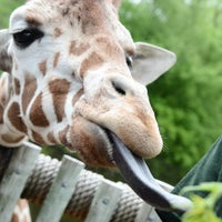 5/25/2013 tarihinde jeffachenziyaretçi tarafından Minnesota Zoo'de çekilen fotoğraf