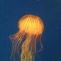 รูปภาพถ่ายที่ Ocean Voyager built by The Home Depot โดย Rachel P. เมื่อ 3/21/2013