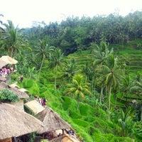 Снимок сделан в Tegallalang Rice Terraces пользователем Patricia R. 3/28/2013