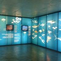 12/11/2013 tarihinde Alfons G.ziyaretçi tarafından Museu de la Pesca'de çekilen fotoğraf
